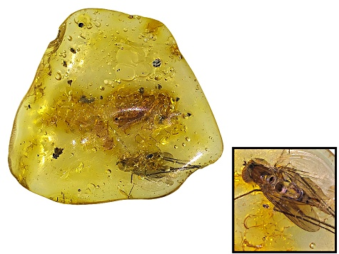 COLOMBIAN COPAL WITH INSECTS 3.87CT FREE FORM ROUGH.  SIZE VARIES