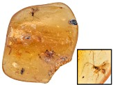 COLOMBIAN COPAL WITH INSECTS MINIMUM 10.00CT FREE FORM ROUGH.  SIZE VARIES