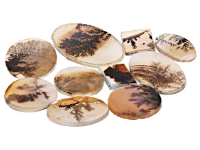 Dendritic Agate Mixed Shape Tablet Set of 10 103.17ctw