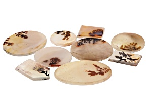 Dendritic Agate Mixed Shape Tablet Set of 9 77.56ctw