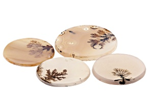 Dendritic Agate Round Tablet Set of 4 55.81ctw