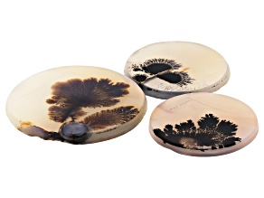 Dendritic Agate Round Tablet Set of 3 54.77ctw