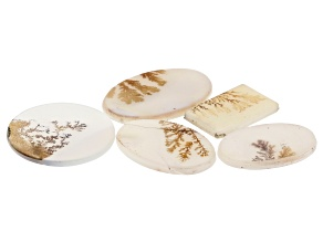 Dendritic Agate Mixed Shape Cabochon Set of 5 45.55ctw