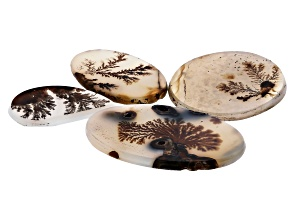 Dendritic Agate Mixed Shape Cabochon Set of 4 31.40ctw