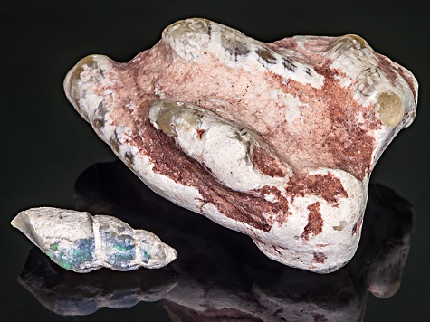 Multicolor Opalised Cone Snail in Matrix Fossil 27x59x19.31mm Free Form Set 25.92ctw