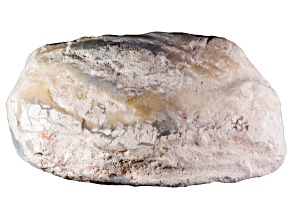 Opalised Freshwater Mussel Shell Fossil Free Form