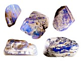 Opalised Plant Fossil Free Form Set