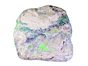 Multicolor Opalised Plant Fossil Free Form