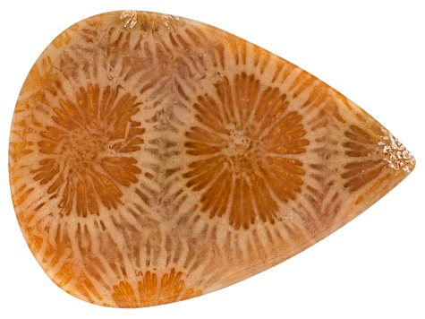 Coral Petrified 30x22mm Pear Shape Cabochon 15.00ct