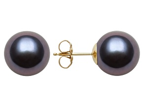 Black Cultured Freshwater Pearl 14k Yellow Gold Stud Earrings 10-11mm