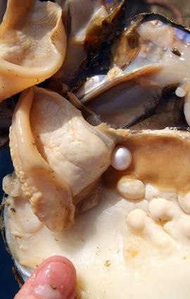 Pearl, Nature's Living Gemstone