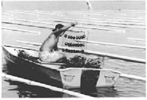 old photo of man catching oysters